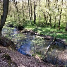 Blick auf die Bille nahe Sachsenwaldau