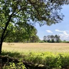 Landschaft bei Nonnendorf auf der Wanderung am Peenestrom
