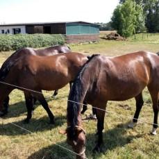 Pferde in Nonnendorf