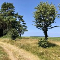 Wanderweg zwischen Freest und Spandowerhagen in Vorpommern