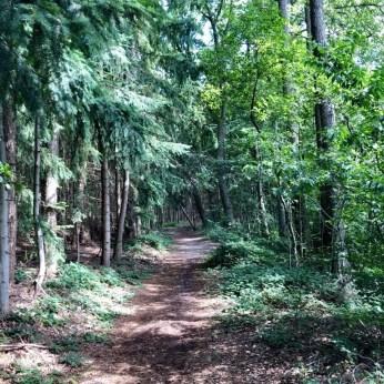 Der Wanderweg westlich des Seedorfer Küchensees