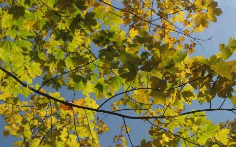 Herbst_007