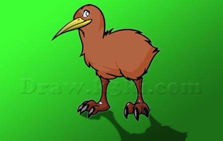تعلم رسم طائر الكيوي
