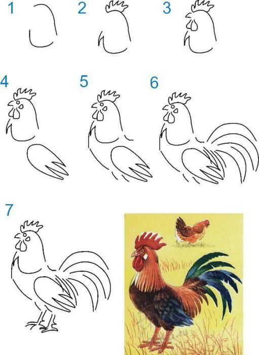 تعلم رسم ديك