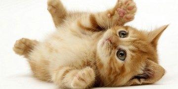 تعليم رسم قطة