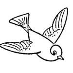 تعلم رسم طائر