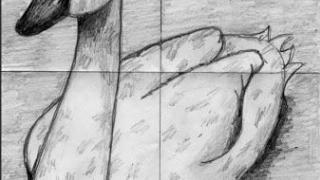 كيفية رسم إوزة