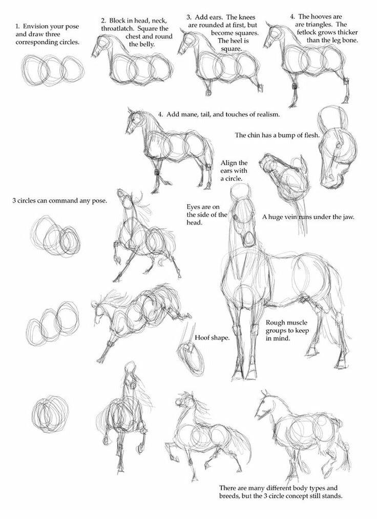 تعلم رسم حصان خطوة بخطوة