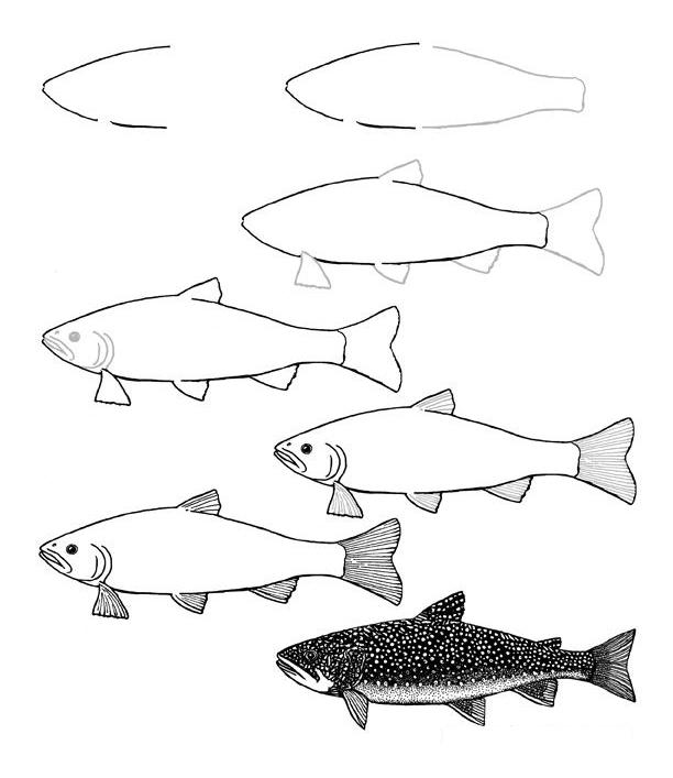 تعلم رسم سمك السلمون المرقط