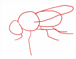 رسم ذبابة
