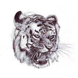 كيف أرسم نمر
