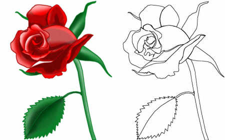 how to draw a dead rose