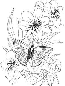 تلوين فراشة تقف على زهرة