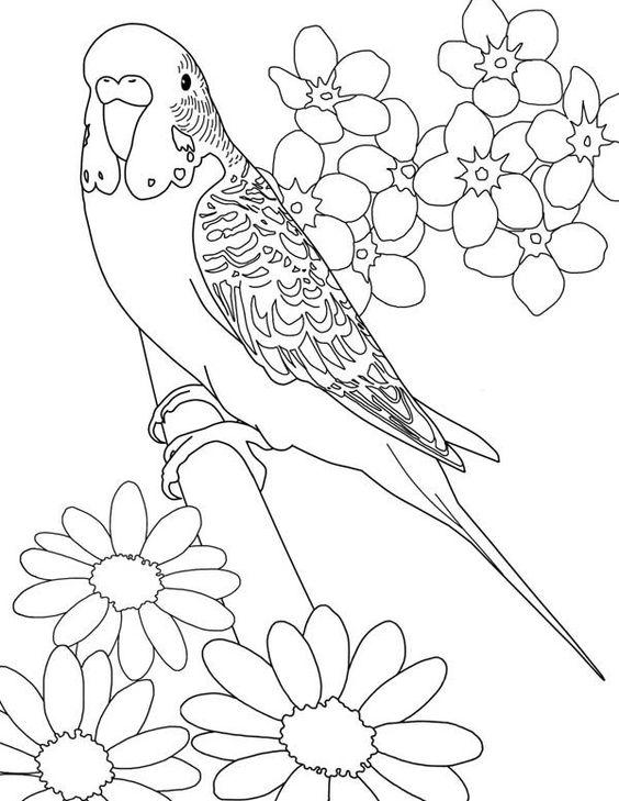 تلوين طائر يقف على غصن ورد