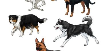 رسم كلب للاطفال