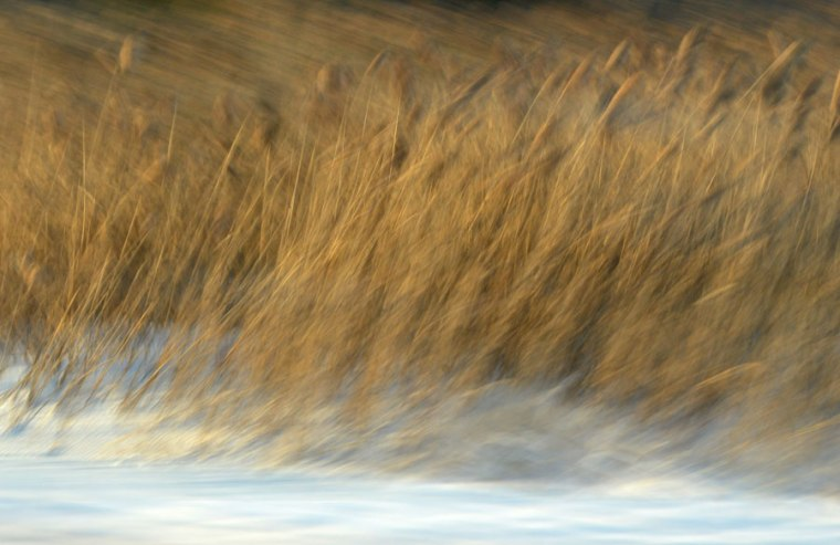WinterGrasses1