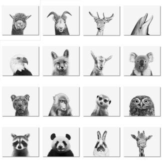 Animal Headshots