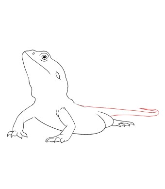 How To Draw A Bearded Dragon Step 5