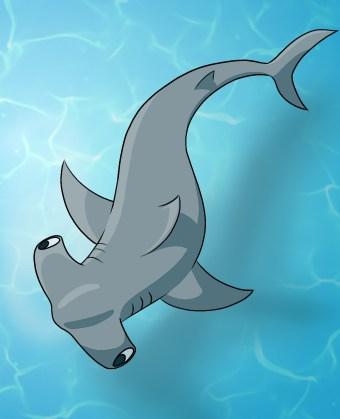How To Draw A Hammerhead Shark Step 8