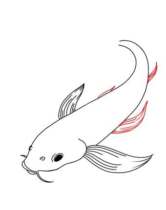 How To Draw Koi Fish Step 7