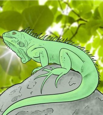 How To Draw An Iguana Step 13