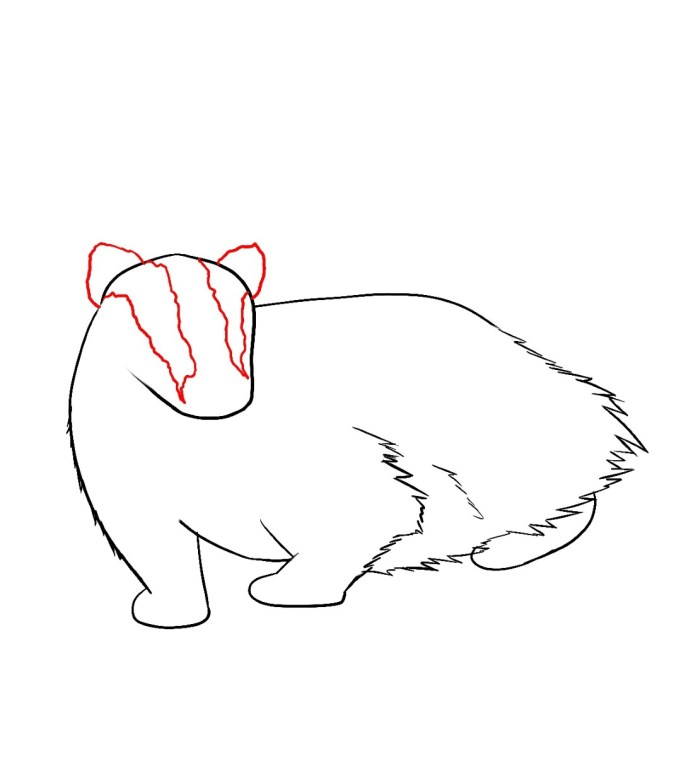 How To Draw A Badger Step 5