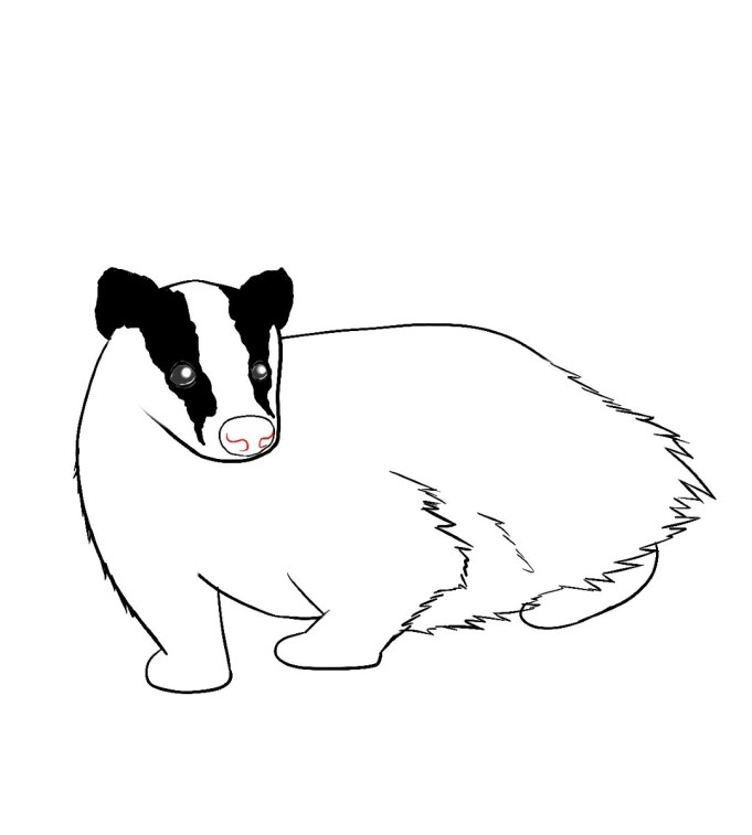 How To Draw A Badger Step 7