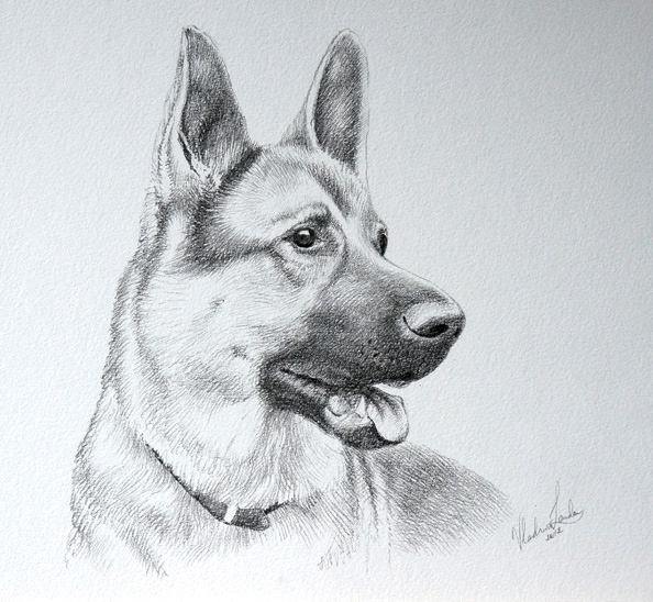 How To Draw A Dog Video Lesson By Drawing Academy