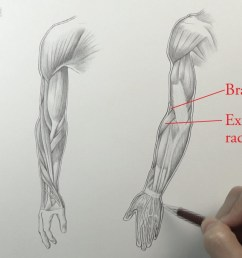 muscles of an arm [ 1280 x 720 Pixel ]