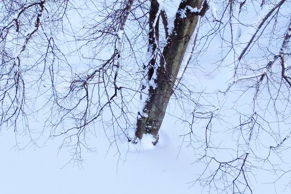 Snowy Photo