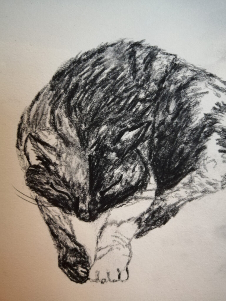 Cats being cats – Creative Time