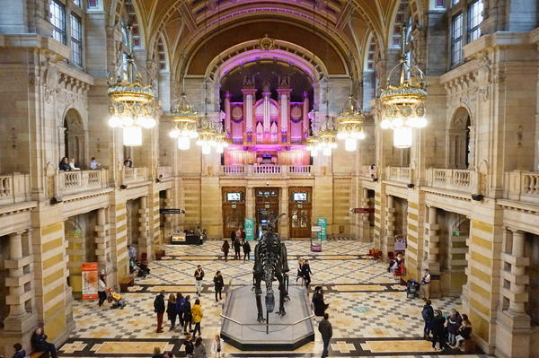 Dippy drops into Kelvingrove museum and art gallery