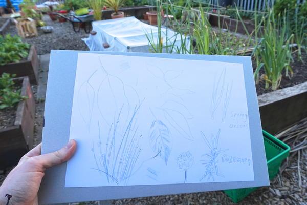 Leafy breezy doodles in the community garden