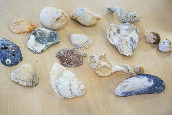 Funky shell and sea patterns