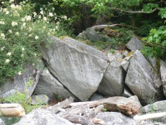 where wild roses and boulders meet