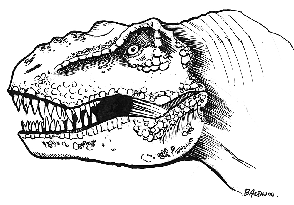 T Rex Skull Diagram, T, Free Engine Image For User Manual