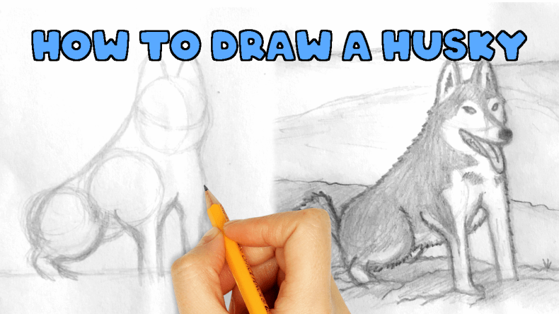 Husky Drawing - how to draw a husky