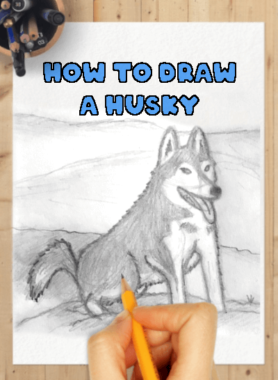 how to draw husky