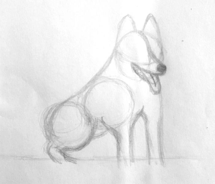 husky-8