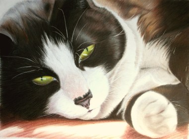 """Monty, commissioned 2013, coloured pencil, 10x12"""""""