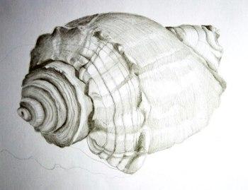 Turret Shell sketch, graphite