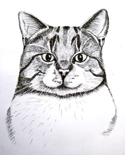 Tabby cat sketch, pen and ink