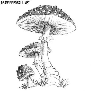 mushroom draw drawingforall