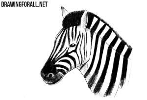 zebra draw head drawing simple line pencil drawingforall