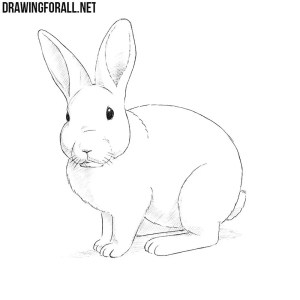 rabbit draw drawingforall