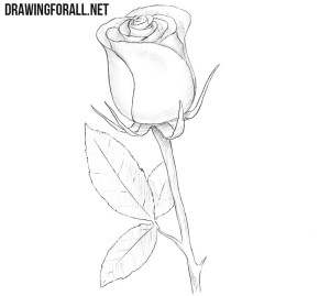 rose draw easy drawing simple sketch stem drawingforall line really bud