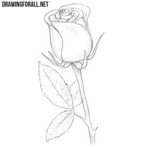 draw easy rose drawing drawingforall drawings simple roses