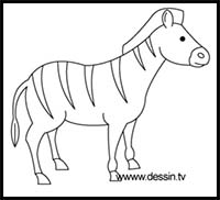 drawing zebra simple zebras draw step easy lessons cartoon learn animals realistic drawings tutorials cartoons paintingvalley