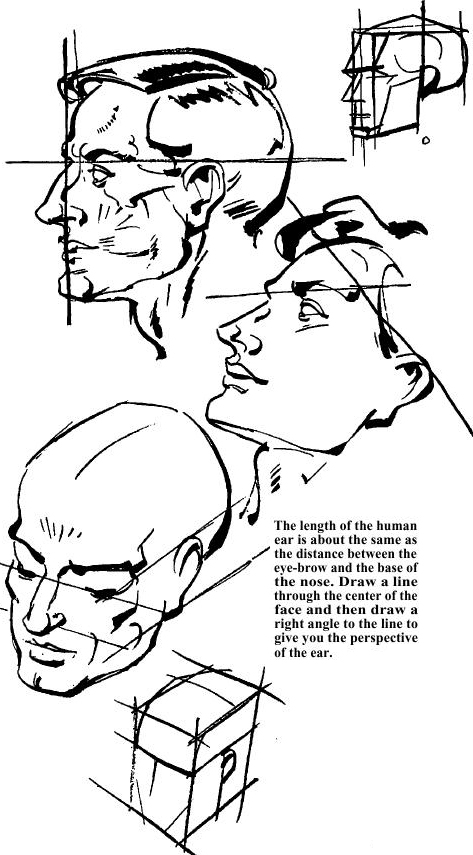 Drawing the Human Face & How to Draw Head, Eyes, Nose