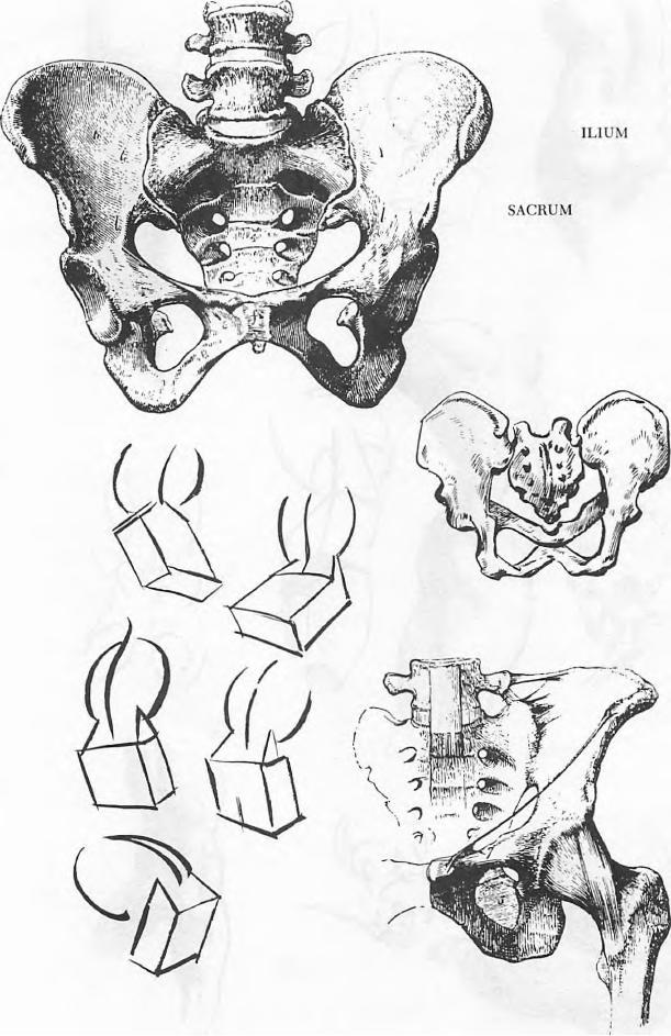 Hip Drawing : drawing, Female, Human, Drawing, Tutorial, Tutorials